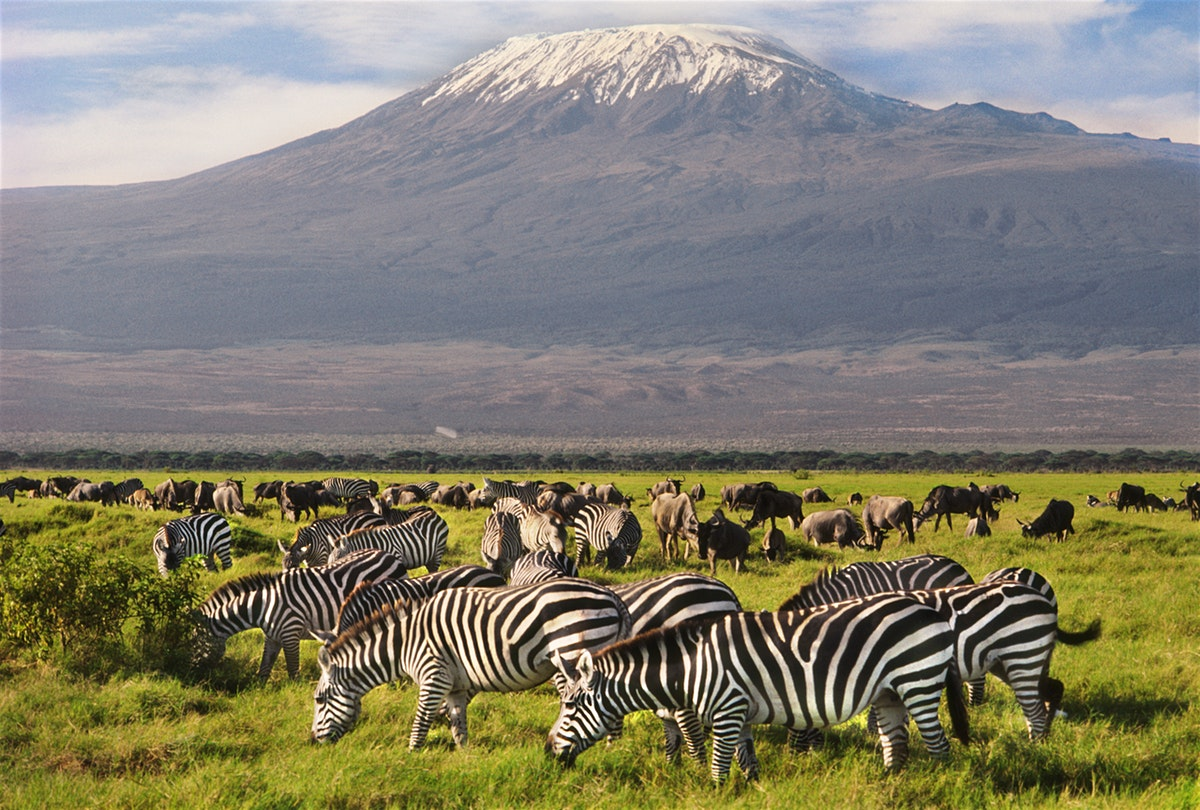 DAY TRIP OR 2 DAYS AMBOSELI