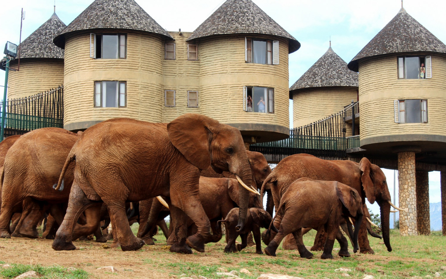 2 DAYS TSAVO EAST & TAITA SALTLICK LODGE